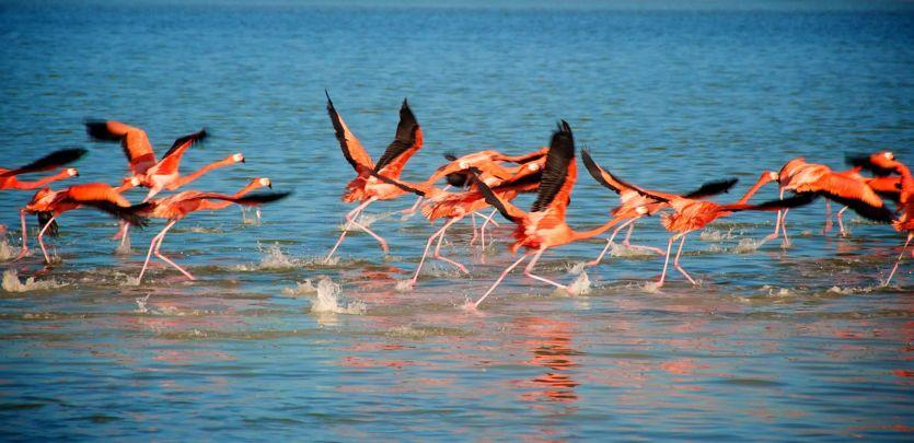 Flamingos im Xcaret Park