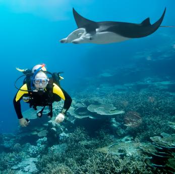 Taucher zusammen mit einem Mantarochen. Im Hintergrund ein Korallenriff.