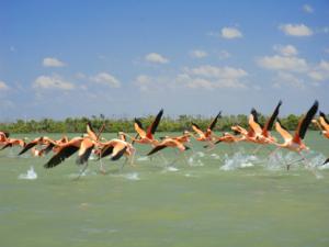Viele Flamingos im Xcaret Park.