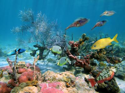 Mexiko Unterwasserwelt - Tauchen Mexiko