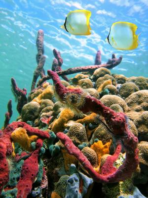 Die spektakuläre Unterwasserwelt der Insel Cozumel. Zusehen ist ein buntes Riff mit einigen Fischen.