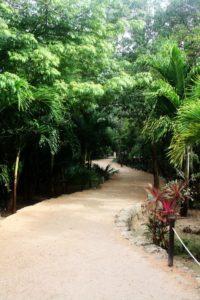 Ein Junglepfad zu den Maya Ruinen in Tulum. Die Fauna ist wunderschön.